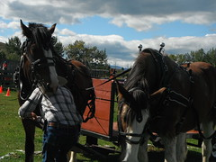Chore Competition  Bar U Historic Ranch (Mr. Happy Face - Peace :)) Tags: historic art2019 ponies horse workhorse clydesdale alberta canada cans2s sky cloud sun autumn fall ranch