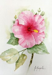 Flor de Hibisco (Roberta art) Tags: hibisco flor aquarela pintura artista painting watercolor arte