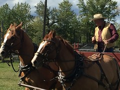 Chore Competition  Bar U Historic Ranch (Mr. Happy Face - Peace :)) Tags: ranch autumn sky horse cloud sun canada fall historic alberta ponies workhorse cans2s art2019