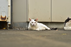 三白眼 (Architecamera) Tags: cat snap street straycat