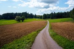 On the Path (Bephep2010) Tags: 2019 7markiii alpha bern himmel ilce7m3 sel1635z schweiz sommer sony switzerland twanntüscherz twannberg wald weg wiesen wolken clouds forest meadows path sky summer ⍺7iii lamboing kantonbern
