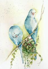 Aquarela . Pássaros e flor (Roberta art) Tags: aquarela arte pintura passaros flor suculenta artista painting art color cor watercolor