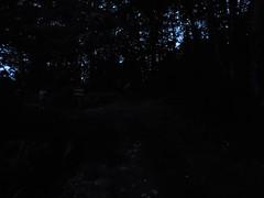 Dusk Hiking - Mystic, CT (bradye21) Tags: mystic ct connecticut hike hiking walk dusk sunset housing apartments field ruins farm sign trees tree mysticseaport noanklibrary stillman mansion stillmanmansion gildedage thomasstillman elizabethstillman victorian mysticlibrary stone stones power lines powerlines trail forest bush brush path deerfly deerflies pleasantstreet naturecenter cooganfarm fern rock formation rockwall wall homestead visitor center nature cedar gallup orchard