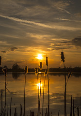 Sunset Silhouette (CraDorPhoto) Tags: canon6d sunset landscape outdoors nature reeds silhouette outside lake water reflections clouds sky golden uk cambridgeshire