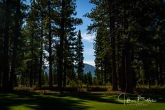 Old Greenwood-940240 (Jeffrey Balfus (thx for 5,000,000 views)) Tags: oldgreenwood sonyalpha tahoe golf truckee california unitedstatesofamerica trees