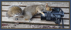 Think you have wrong setting (maryimackins) Tags: squirrel camera wildlife mary mackins