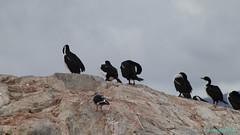 Ushuaia, Tierra del Fuego, Argentina (Neil M Holden) Tags: ushuaia tierradelfuego argentina wildlife nature worldtrekker birds