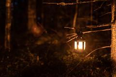 lyhtykävely 10 (VisitLakeland) Tags: finland kuopio kuopiotahko lakeland puijo puijonaturepark puijontorninkahvila puijontorni dark lantern luonto lyhtykävely maisema nature night outdoor pimeä puijotower scenery yö