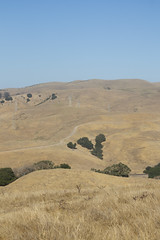 Golden Hills (II) (imartin92) Tags: christie california eastbay hills grassland ranch