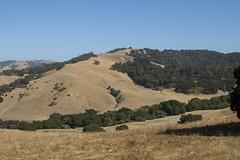 Golden Hills (I) (imartin92) Tags: christie california eastbay hills grassland ranch