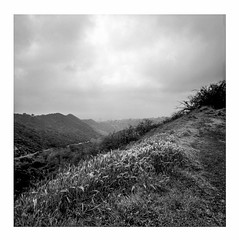 (ADMurr) Tags: la griffith park plants hillside hollywood mf rolleiflex 35 e zeiss planar 6x6 square ilford 125 dba624