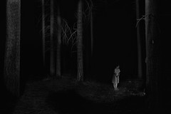 magic (the ripped bystander) Tags: blackwhite forest trees darkness night female white dress fairy