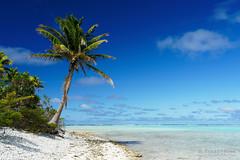 20190911-64-Coconut palms over shite sand beach on One Foot Island (Tapuetai) (Roger T Wong) Tags: 2019 aitutaki cookislands onefootisland pacific pacificisland rogertwong sel24105g sony24105 sonya7iii sonyalpha7iii sonyfe24105mmf4goss sonyilce7m3 tapuetai beach blue coconut holiday isalnd lagoon sand sea sky travel water white
