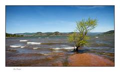 Le vent - The wind (Rémi Marchand) Tags: lacdusalagou salagou vent eau arbre hérault vagues landscape canoneos7d canonefs1755mmf28isusm occitanie france wind paysage