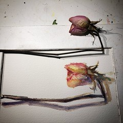 Day 1501 The #rose #painting for today. #watercolour #watercolourakolamble #sketching #stilllife #flower #art #fabrianoartistico #hotpress #paper #dailyproject (akolamble) Tags: rose painting watercolour watercolourakolamble sketching stilllife flower art fabrianoartistico hotpress paper dailyproject
