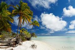 20190911-57-Coconut palms over shite sand beach on One Foot Island (Tapuetai) (Roger T Wong) Tags: 2019 aitutaki cookislands onefootisland pacific pacificisland rogertwong sel24105g sony24105 sonya7iii sonyalpha7iii sonyfe24105mmf4goss sonyilce7m3 tapuetai blue holiday isalnd lagoon sand sea sky travel water white