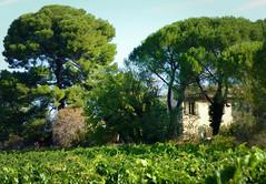 Bastide du Comtat Venaissin... Reynald ARTAUD (Reynald ARTAUD) Tags: 2019 fin août occitanie provence comtat venaissin bastide reynald artaud