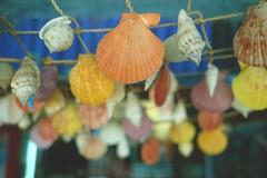 Sea Shell Hanging (joeryCampos) Tags: fujifilm fujiframez x20 fujifilmx20 sea shell shells seashells beach figures object