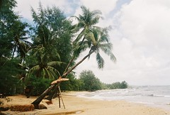 Phu Quoc (Mathildx) Tags: beahc vietnam palmtrees
