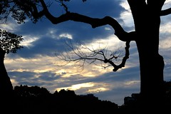 Golden hour (Abhay Parvate) Tags: golden goldenhour sunset colors colorful nature tree branches silhouette kitanomarupark 北の丸公園 clouds