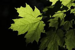arbre_Takumar 50mm f1,4__DSF2864 (J-P Rioux) Tags: arbre tree forêt jprioux fujifilm xt3 takumar50mmf14 escarpement sentier