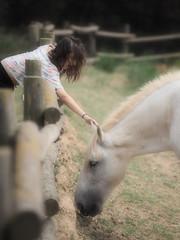 Horse... (Felip Prats) Tags: horse cavall caballo