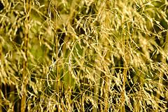 Grasses (ianbartlett) Tags: outdoor 365 nature wildlife birds dragonflies grasses leaves monochrome closeup colour shadows light