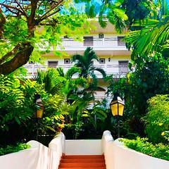 Nature, in la Mariposa Hotel. (hotellamariposa) Tags: hotellamariposa quepos lamariposa costarica puravida manuelantonio costaricapuracoupletravelgoals