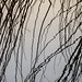 Abstraction of Reeds - Abstraction de roseaux