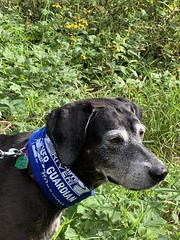 Maggie the River Guardian (Friends of the Mississippi River) Tags: dogs river guardians advocacy