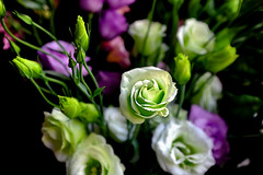 Lisianthus & bulbs (Fnikos) Tags: lisianthus bulb bulbs bulbos eustoma flower flowers flor flores fiore fiori leaf leaves nature naturaleza natura natur green white red purple color colour colores colours colors dark light shadow shadows dof depth depthoffield bokeh outside outdoor