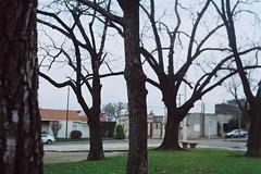 (Joaquin Corbalán) Tags: shootfilm trees 35mmphotography filmisnodead filmcamera proimage100 argentique onfilm