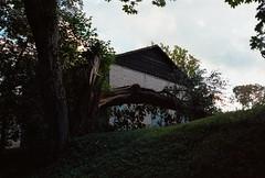 Fallen tree (Andž) Tags: filmphotography kodak ektar100 ektar minolta x700 film filmisnotdead ishootfilm analog analogphotography mdrokkor rokkor nature