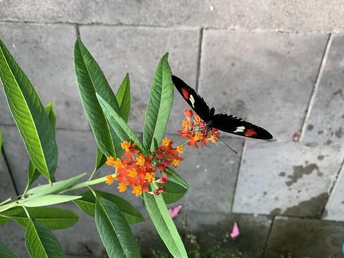 Schmetterlingshaus im Schloßpark Gavnø