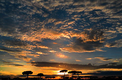 sud (pamo67) Tags: pamo67 south tramonto sunset nuvole clouds alberi trees silhouette controluce backlight cielo sky pasqualemozzillo