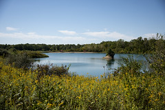 Goldenrod Oh (aaron_gould) Tags: national outside nikkor water sky nature blue tree green flowers art light sun summer trees yellow lake ohio d810 park goldenrod island pine peace