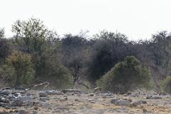 Namibia (stefan_fotos) Tags: tiere urlaub natur vögel namibia etosha qf geier hyäne africa park animals national hyena