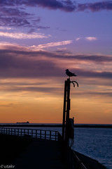 Seagull morning (Uta_kv) Tags: flower sunrise photography canon5d canoneos parkdale magichour goldenhour canon5dclassic seagull ships flowers colourful smctakumar135mm
