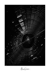 Workaholic (Marian Smeets) Tags: spin spinnenweb spiderweb spider web zwartwit monochroom monochrome natuur nature natuurfotografie naturephotography workshop fotografieworkshopbosfotografie mariansmeets martinpodt edwinmooijaart photoworkshop photoworkshopinthewood landschap landscape landscapephotography landschspsfotografie 2019 nikond750 nikcollection nikkormacrolens105mmf28 macro macrophotography macrofotografie