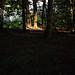 Im Wald (04)
