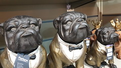 Handsome Trio. (ManOfYorkshire) Tags: dog things ornaments living style clothed dogs trio