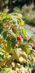 Photo of Fruitful 20190919_140232