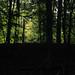 Im Wald (03)