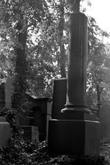 Jewish Cemetery (ucn) Tags: zeissikondonata2277u agfarodinal tessar135cmf45 rollexpatent6x9cm ilfordhp5400 jüdischerfriedhof jewishcemetery prenzlauerberg berlin