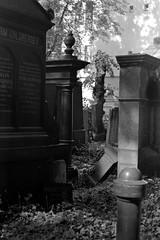 Jewish Cemetery (ucn) Tags: zeissikondonata2277u agfarodinal tessar135cmf45 rollexpatent6x9cm ilfordhp5400 berlin prenzlauerberg jewishcemetery jüdischerfriedhof