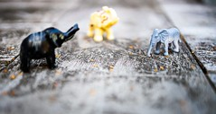 Three is a crowd (Peter Branger) Tags: lookingcloseonfriday tres elephant macro canoneosr canonrf35mmf18macroisstm three