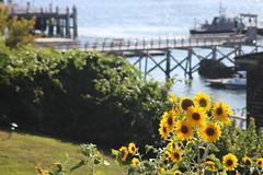 IMG_0127 (ScarletPeaches) Tags: portland maine oldport peaks island casco bay ferry sights