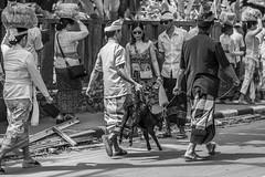 Bali (michaels.jeff) Tags: bali indonesia travel strret streetphotography a7r3 sony sonyalfa blackandwhite bw