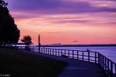 Lake Ontario morning (Uta_kv) Tags: flowers flower sunrise photography canon5d canoneos parkdale magichour goldenhour canon5dclassic asahi smctakumar135mm takumarlens