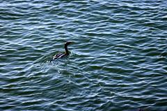 IMG_0105e (ScarletPeaches) Tags: portland maine oldport peaks island casco bay ferry sights